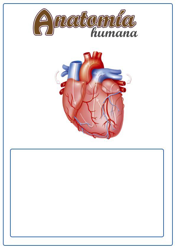 caratula de anatomía