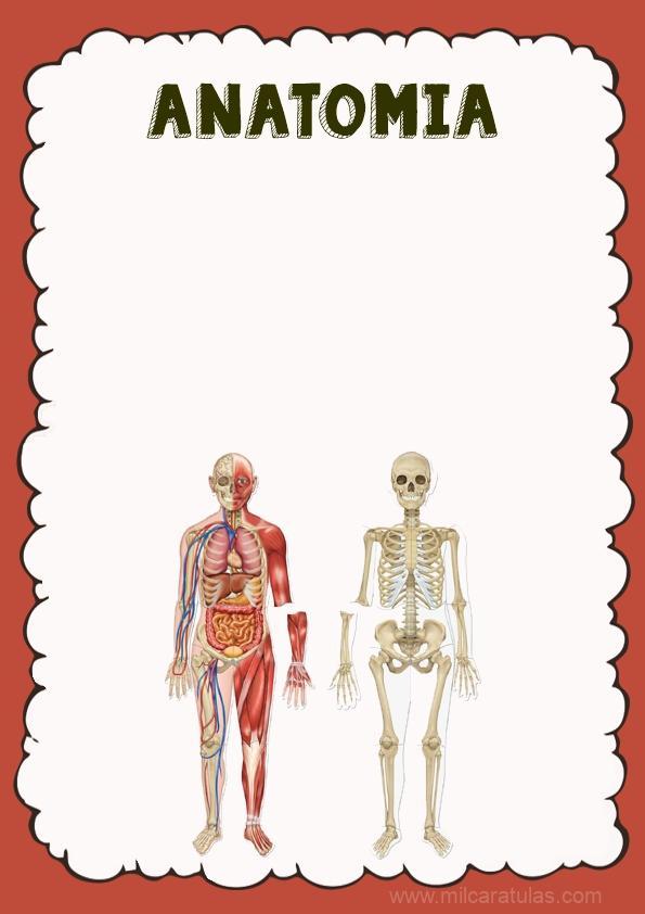 caratula para cuaderno de anatomia